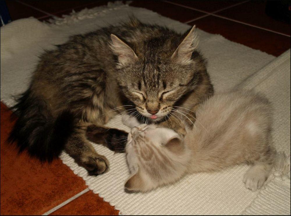 Mother Cat & Her Kitten Son