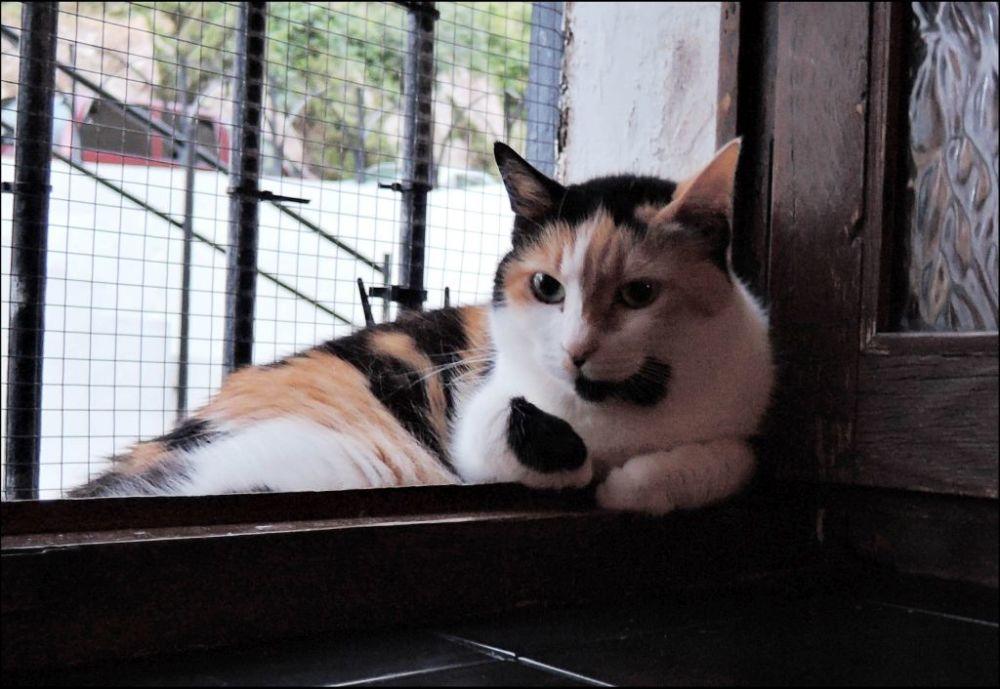 Jodi  by The Window.