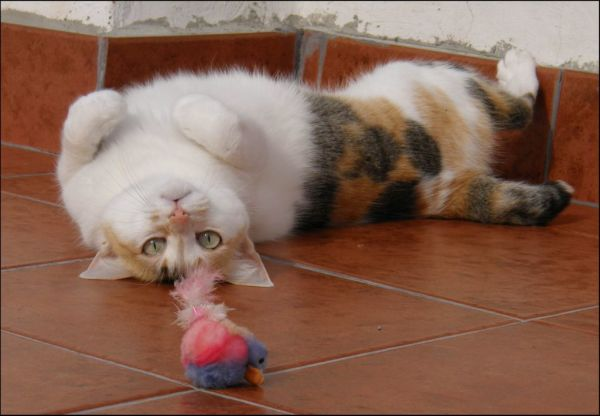 Gimo's Favorite Toy