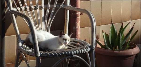 Kitten on The Weather Beaten Chair
