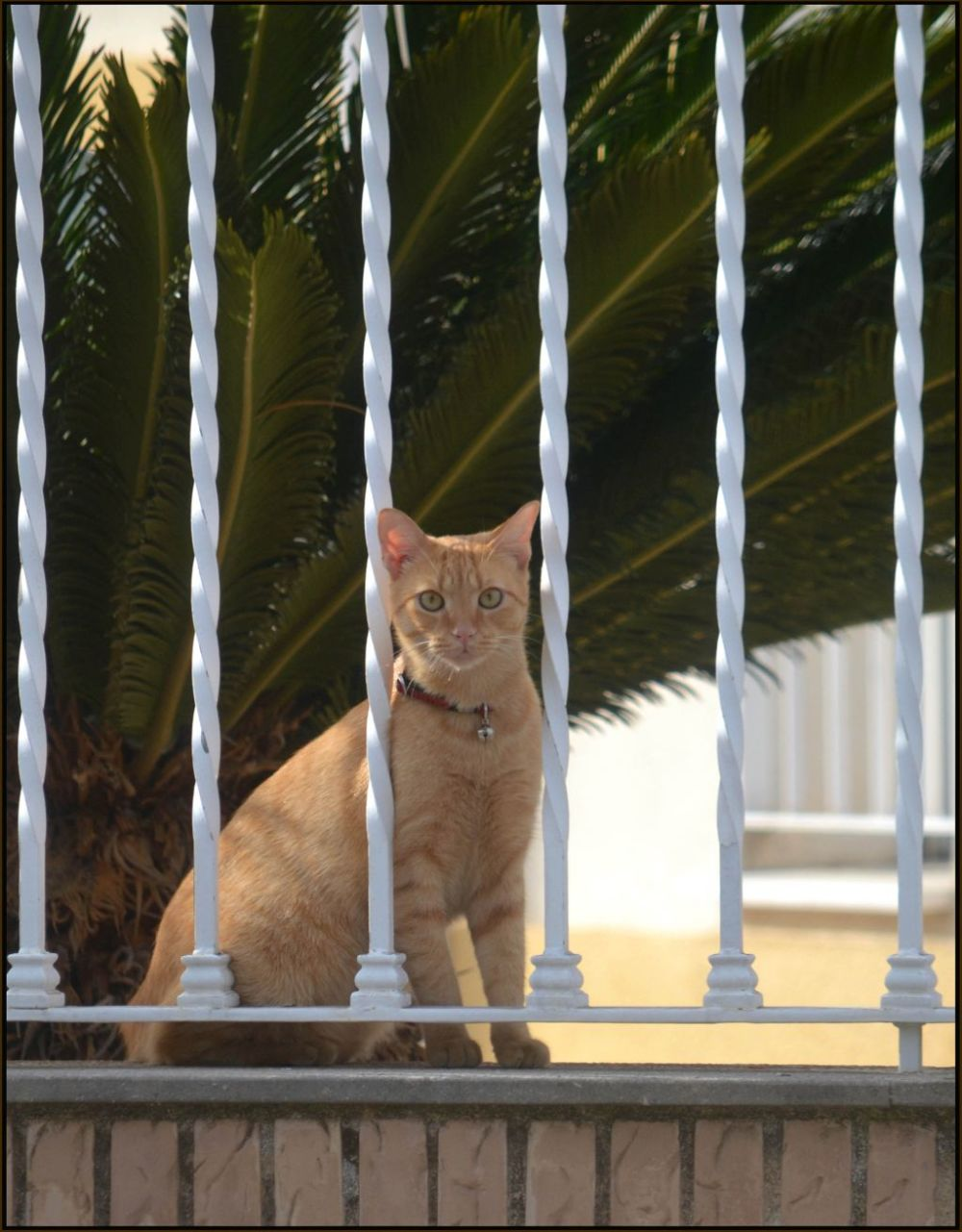 Tabby Cat in The Garden Terrace