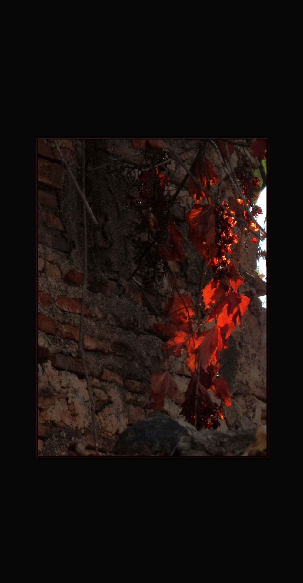 Autumn Leaves on The Old Brick Wall