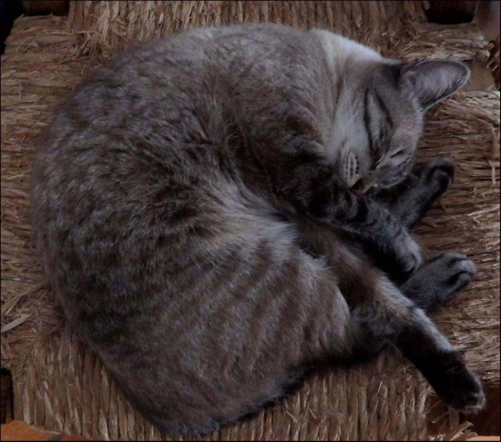 Sound Sleep - Kirin (=^・^=)