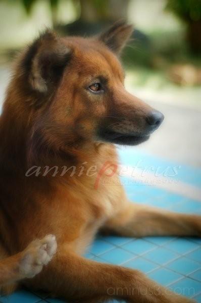 My Dog2