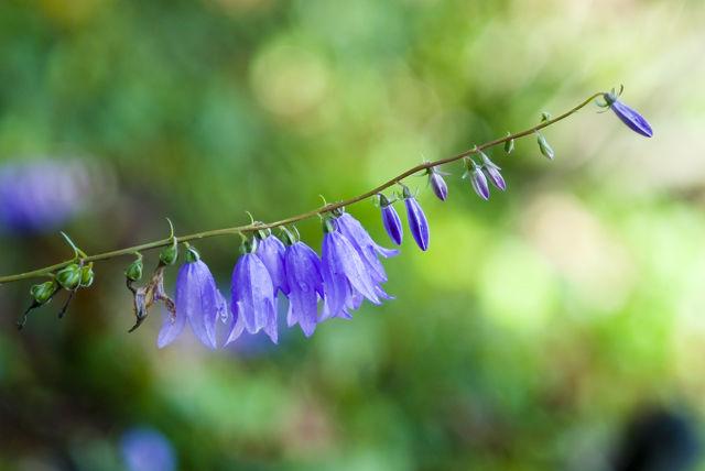 Nature's Bells