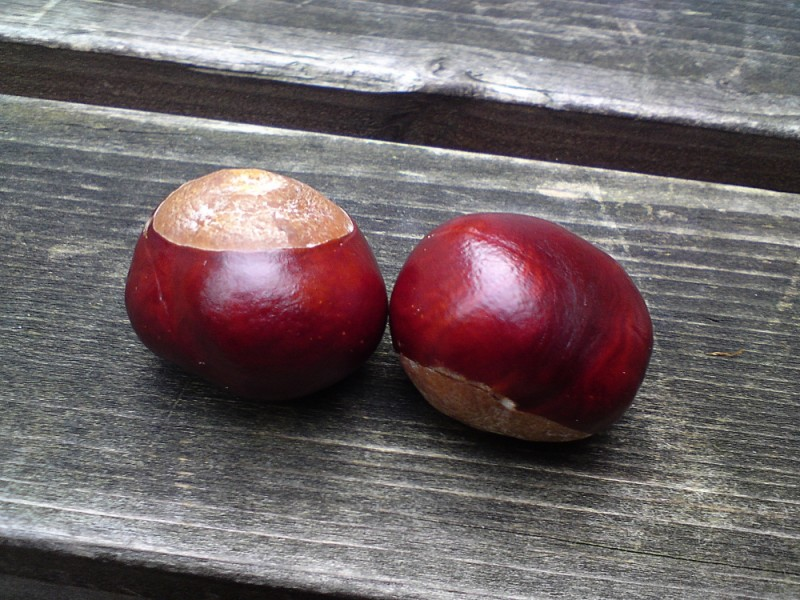 A SHOT OF MY TWO CONKERS