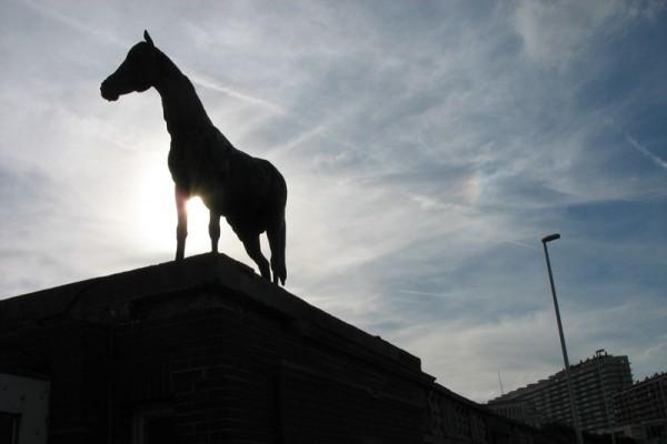 Horse & Sundog