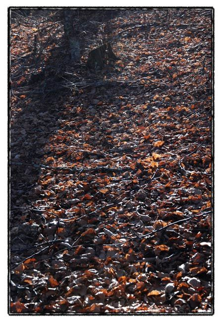forest walk IV