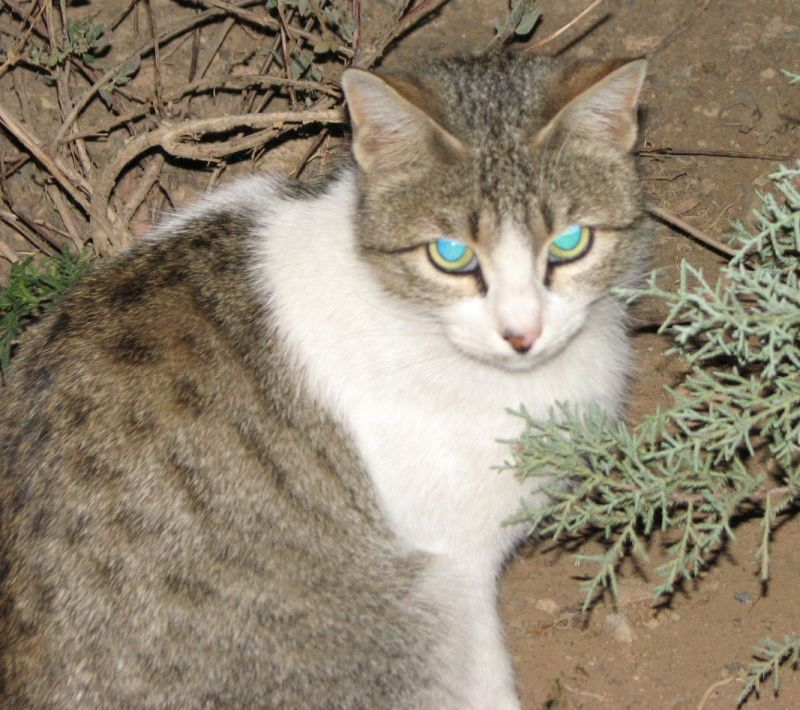 cat with flashed eyes