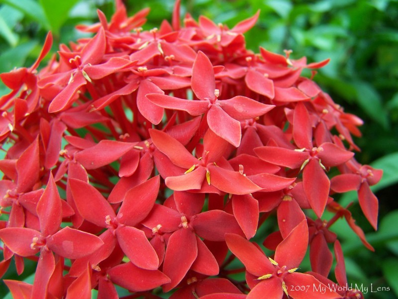 Red Bunch