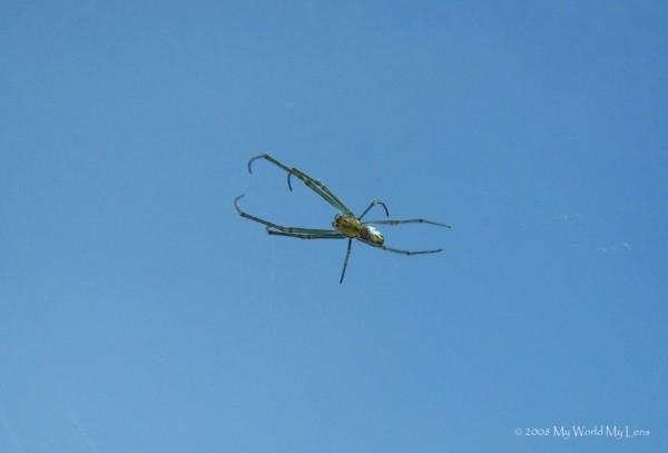 It's A Bird, It's A Plane, No It's Spider...