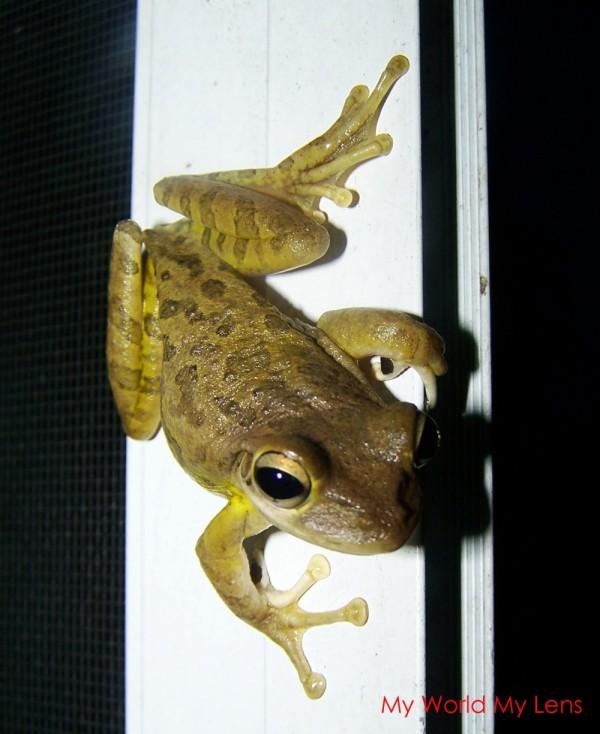 Florida Wildlife: Amphibian