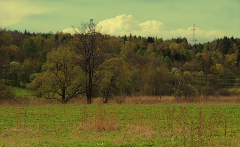 istra nature trees green