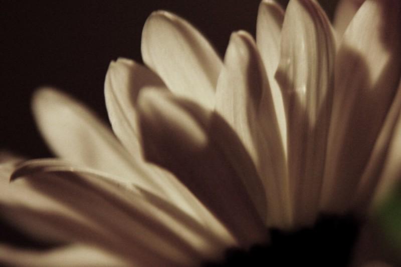 Alla's Flower
