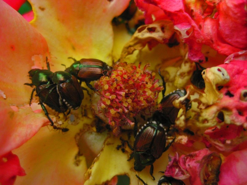 bugs in the flower
