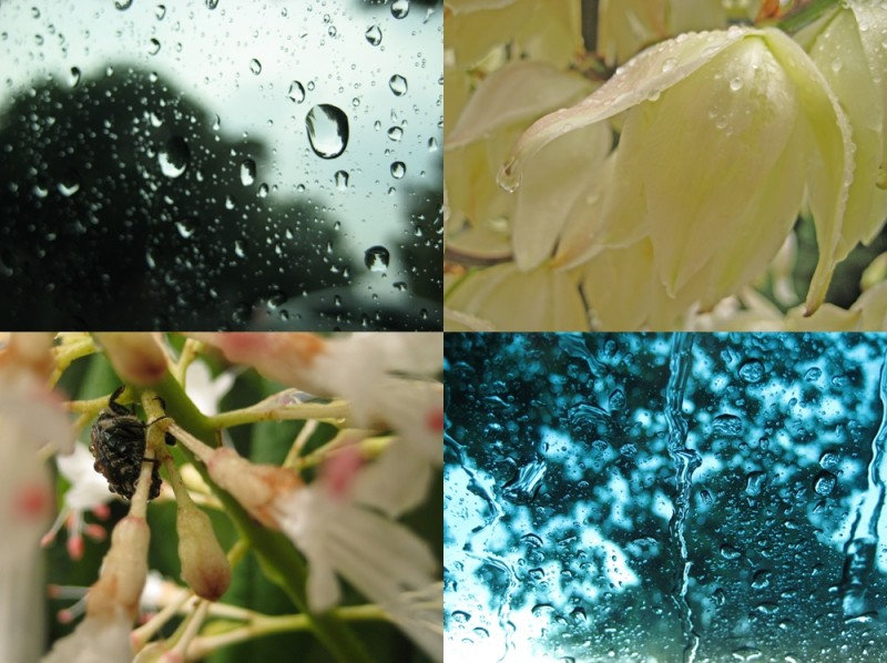 rain flower collage