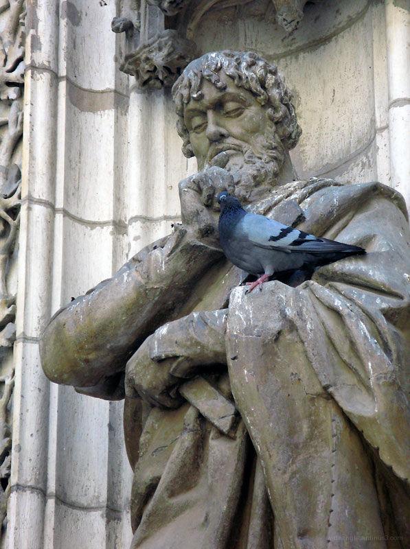 Stroke a pigeon