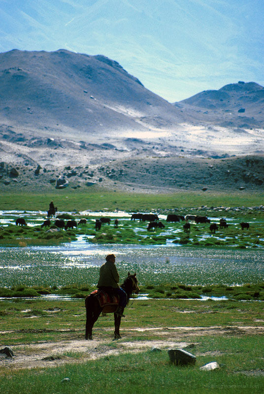 horse rider in pamirs