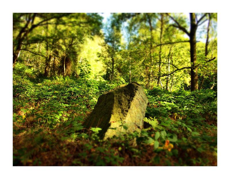 Wood Rock