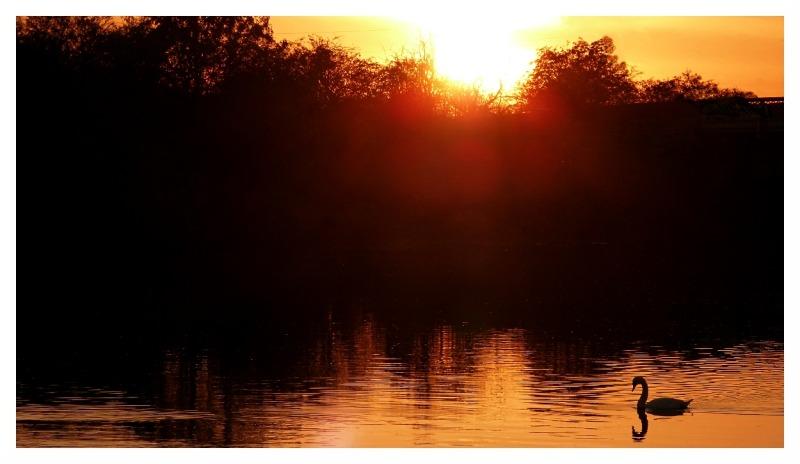 River Trent Sawley