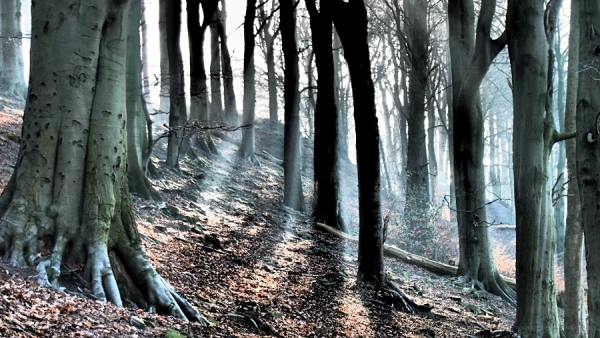 dramatic tone belper woods