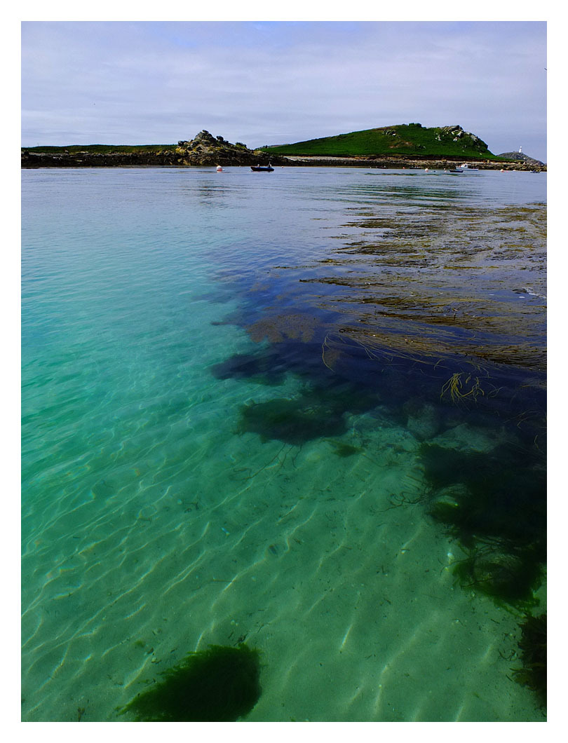 clear sea green blue seaweed st martins