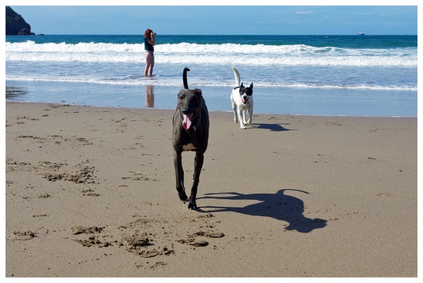 dogs beaches running  tongues fun sea waves kitty