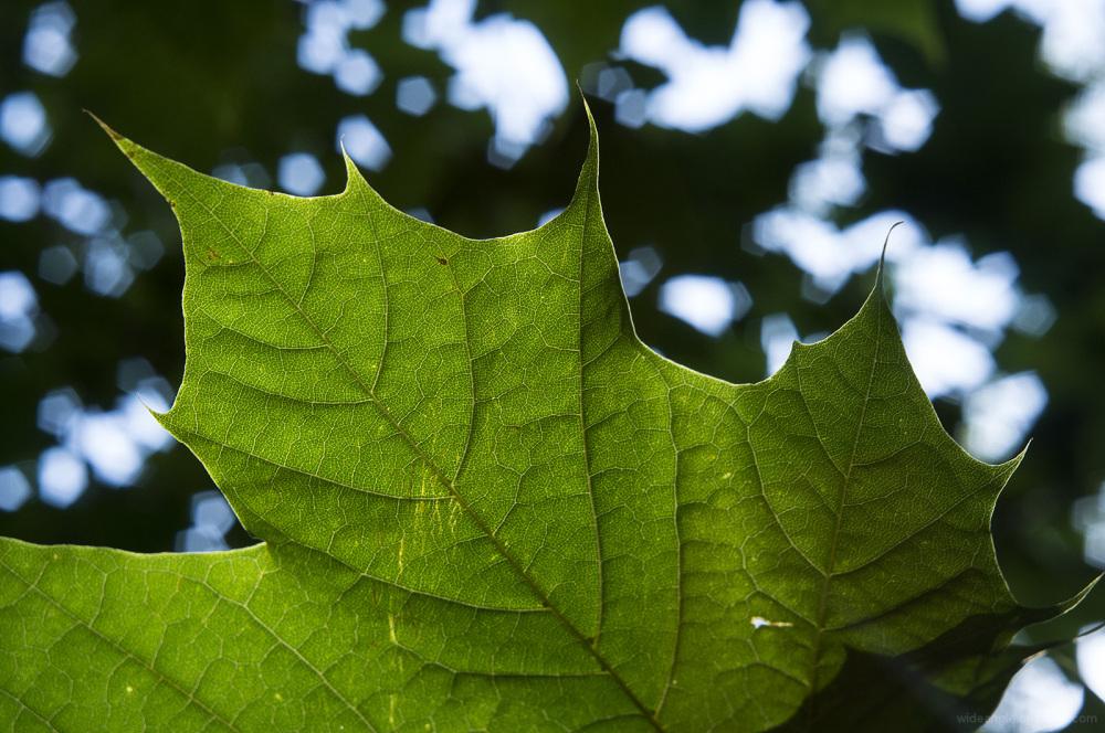 leaf structure jupiter12 close-up