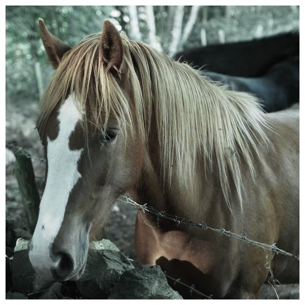horse belper walk woods
