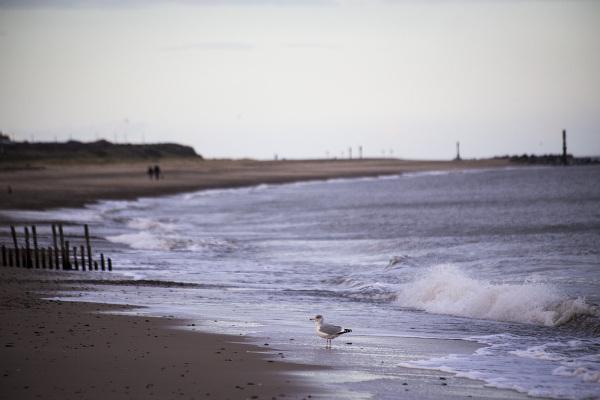 walkers gull sand beach norfolk coast