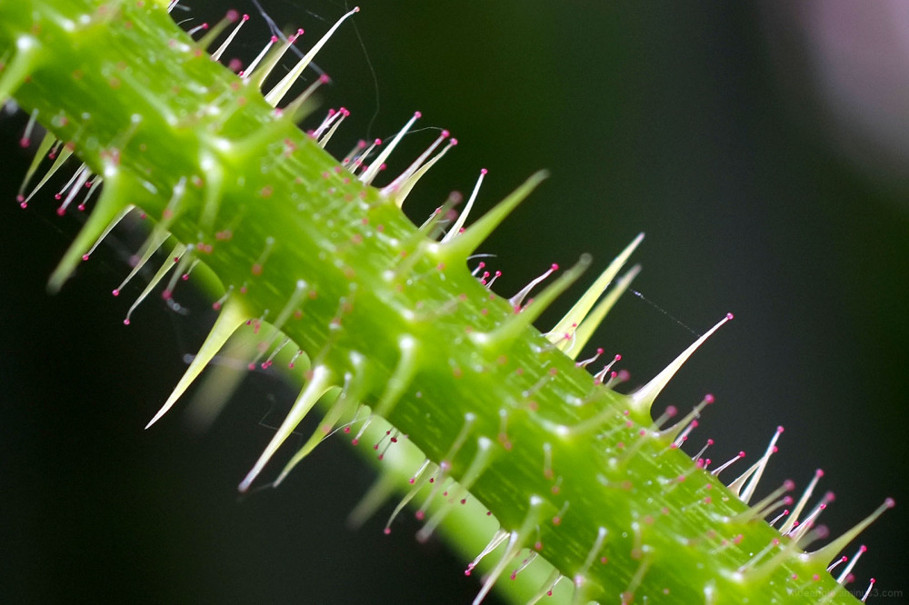 bramble macro spines garden