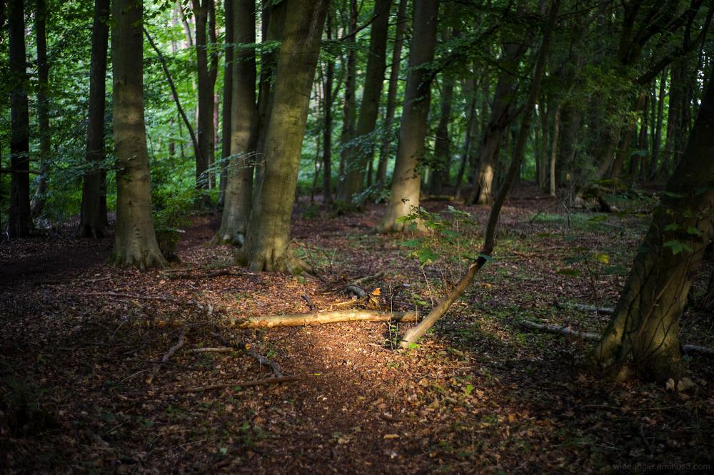 sunny glade woodland sunlight spirits