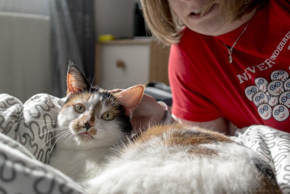 jezebel cats pets