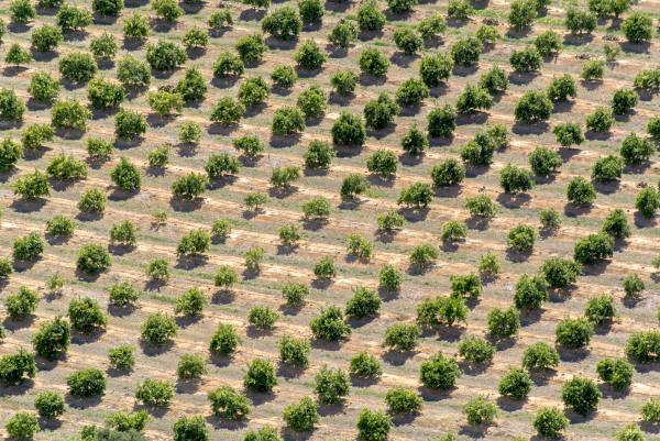 trees plantations orchards fruit spain citrus