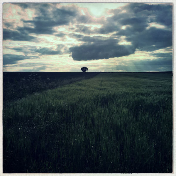 shardlow fields evening walk aston-on-trent