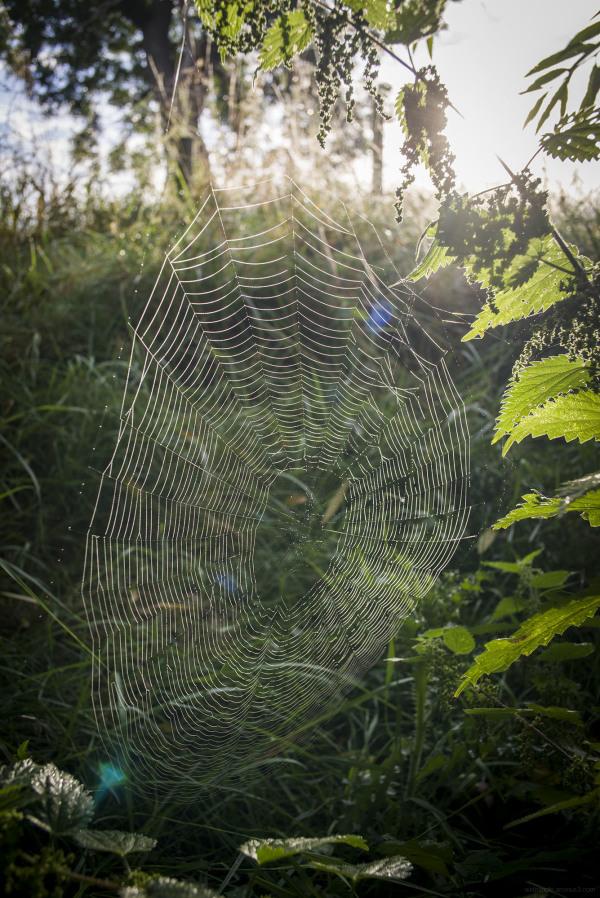 spider web dew glow wildlife