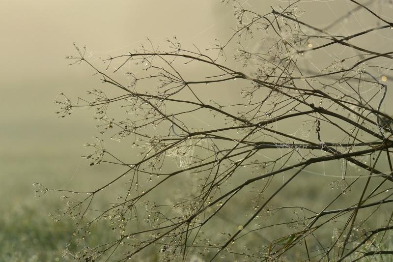 river trent fields sunrise plants dew