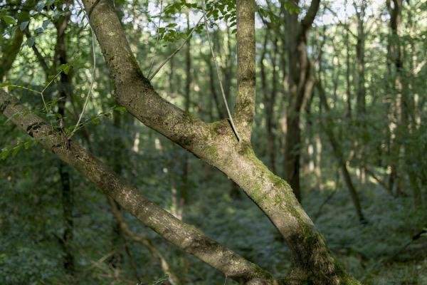 trees woods shining cliff ambergate