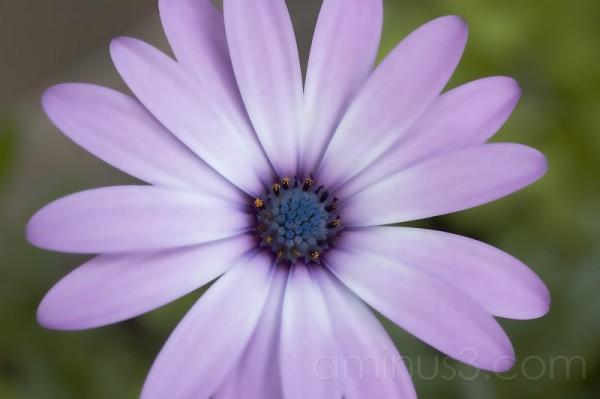 daisy a day..