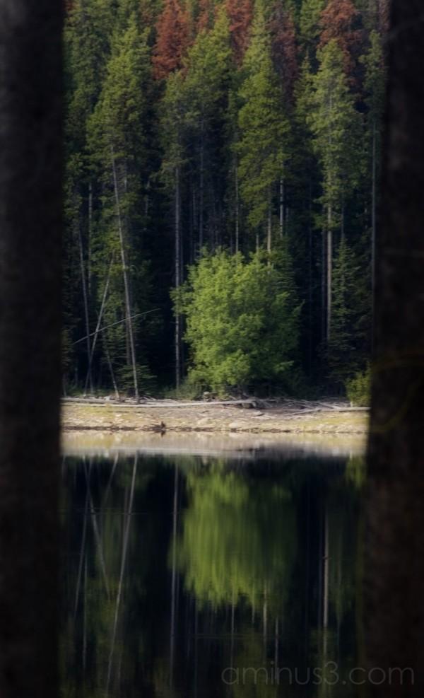 Reflecting thru'
