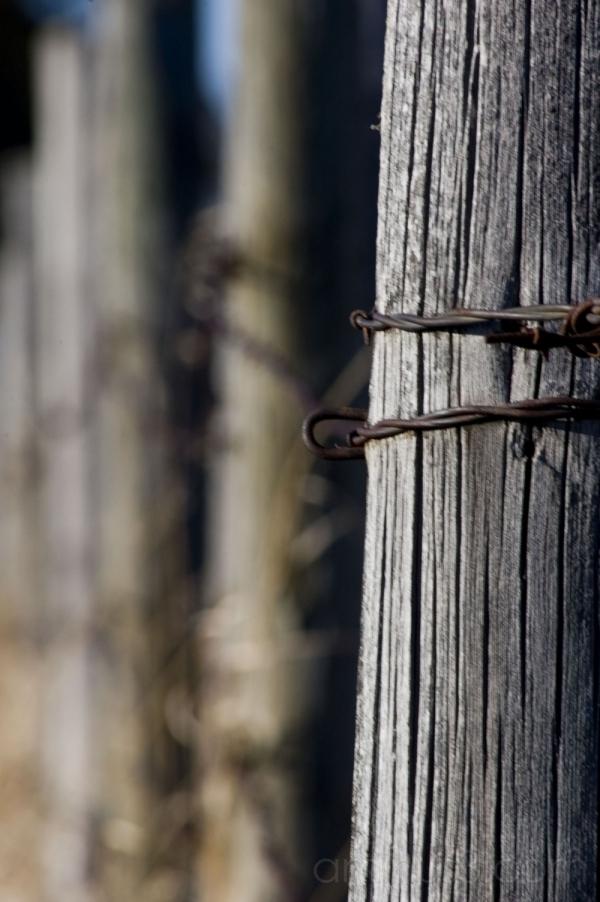 fenced again..