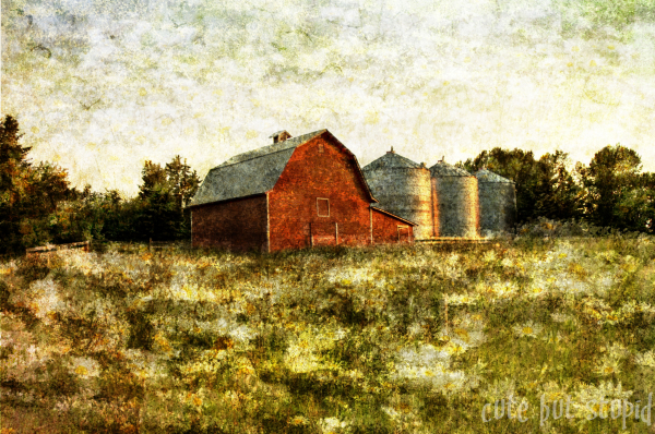 red barn daisies textured summer