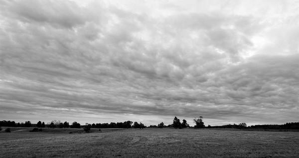 Newmarket Fields