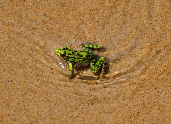 frog lake winnipeg