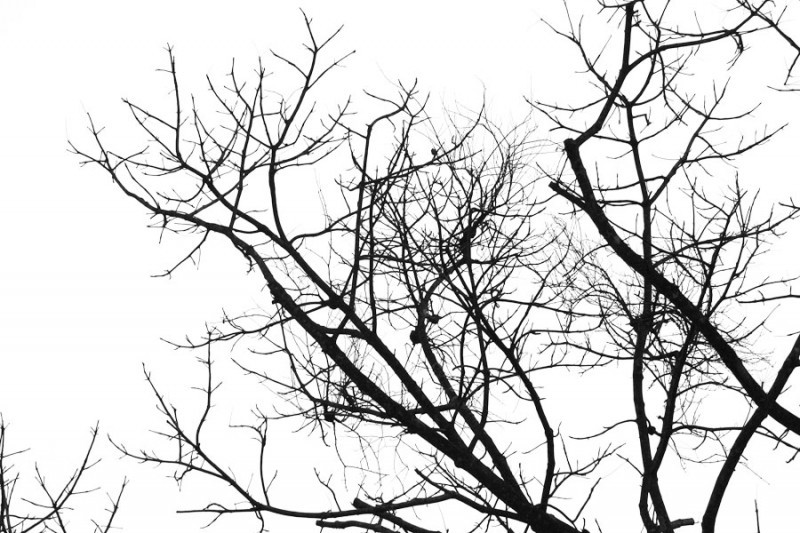 silhouette of tree branches