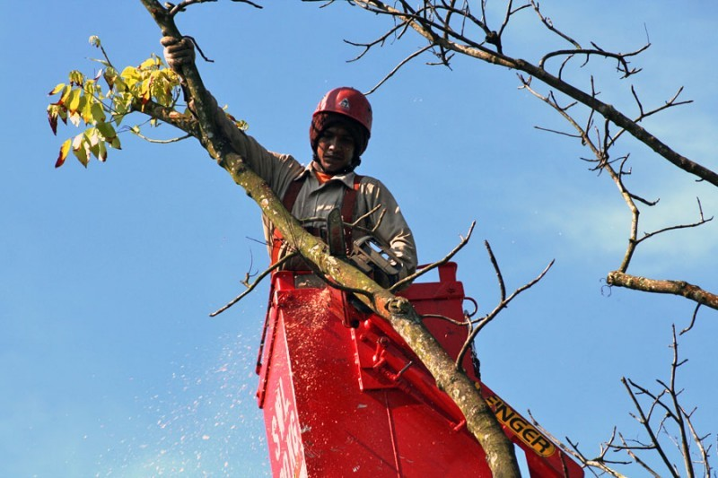 man cutting tree branches in a red crane
