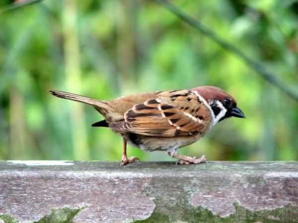 Bird @ the Park