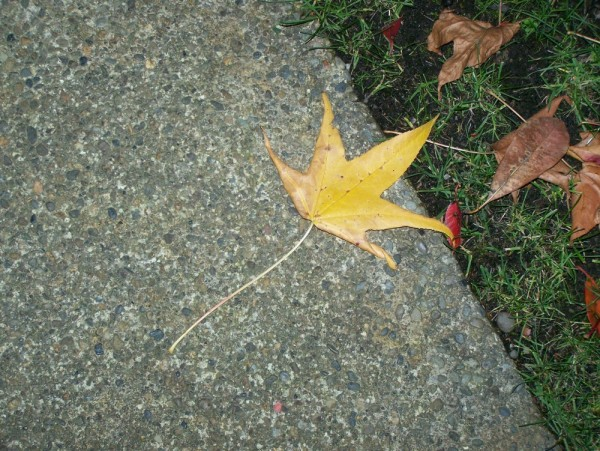 Last leaf