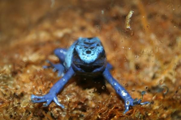 Endangered - Code: Blue