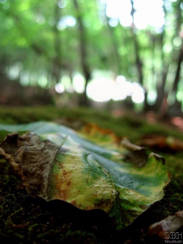 Departed Leaf